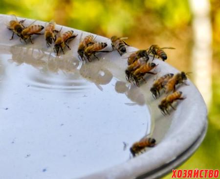 Плохое опыление Пригласите пчел_2.jpg