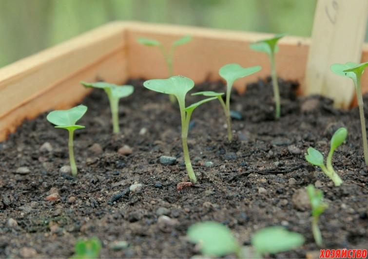 Грунт для рассады капусты.jpg