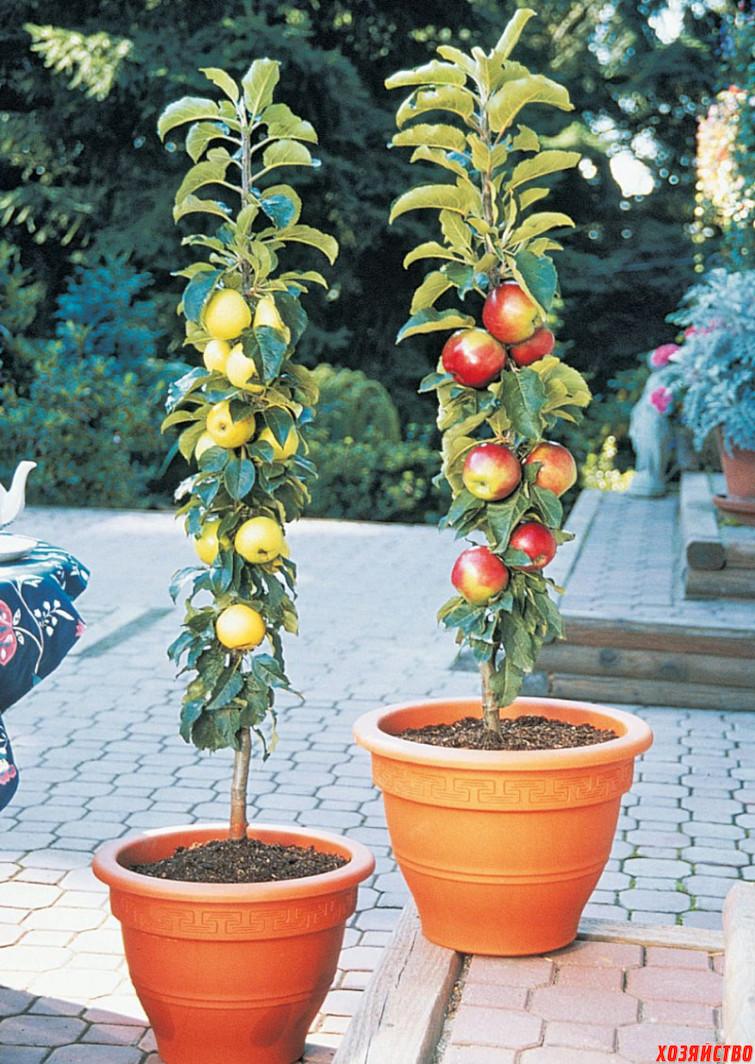 q-columnar-apple.jpg