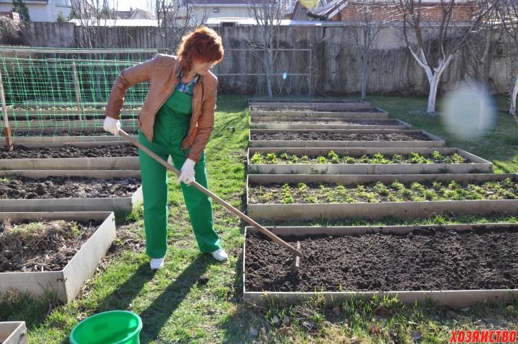 Сидераты заменят навоз и облегчат труд садовода.JPG