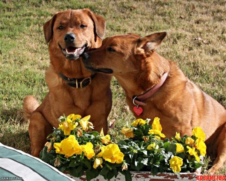Весна – пора любви животных2.jpg