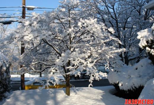 Garden-in-winter-520x356.jpg