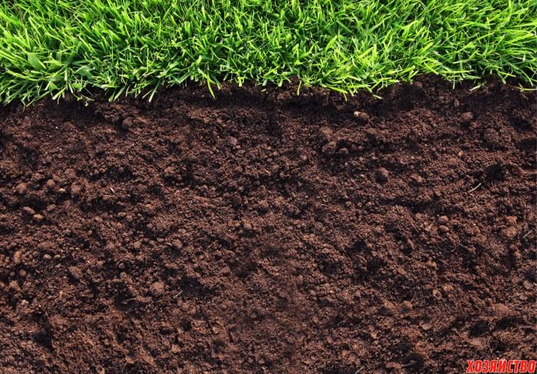 почва.jpg