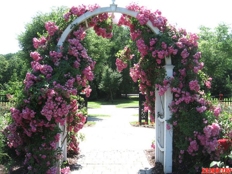 садовая арка своими руками_пример2.jpg