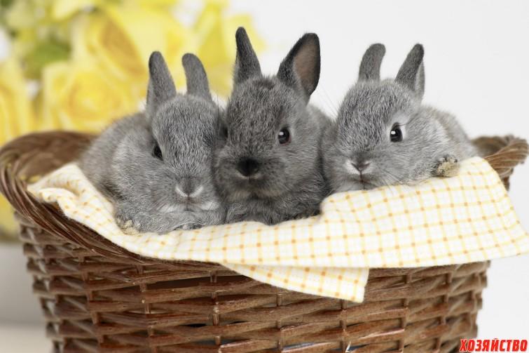 кролики.jpg