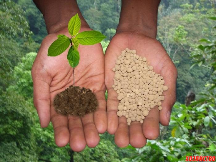 Как зависит урожайность сада от азотных удобрений.jpg