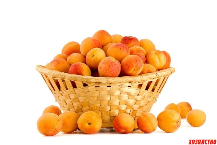 Выбираем сорта абрикоса, которые будут плодоносить3.jpg