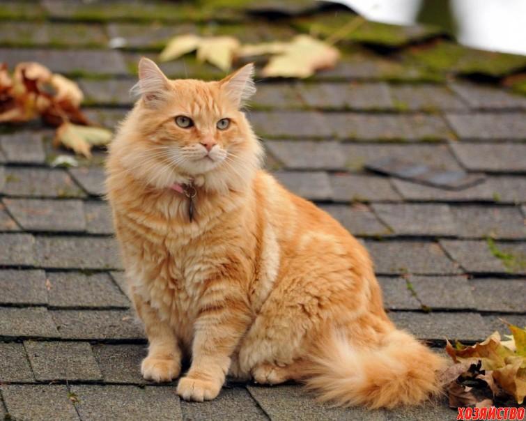 Забавная история о наглом рыжем коте.jpg