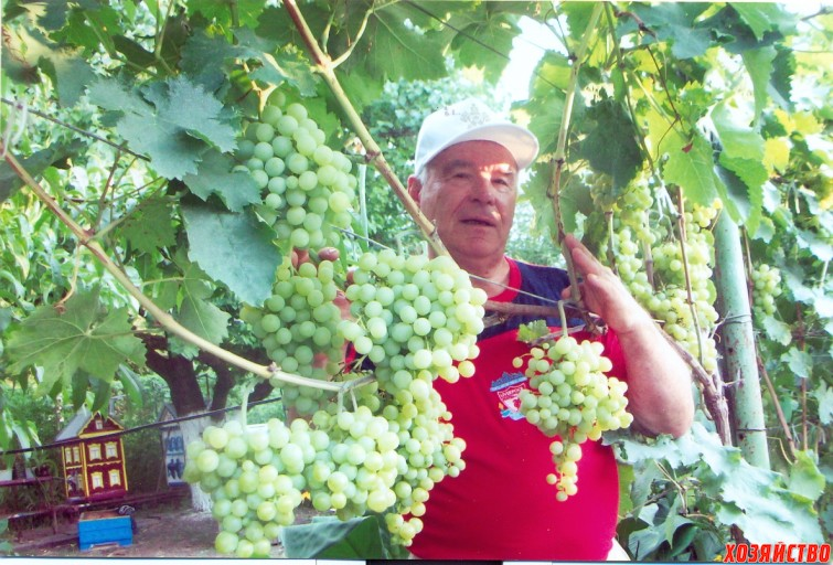 виноградник0002.jpg