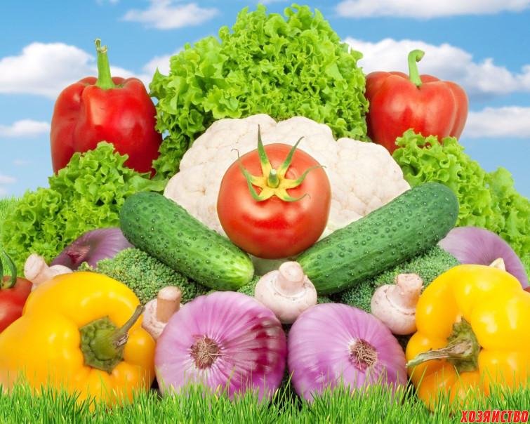 Семь причин не всхожести семян овощей.jpg