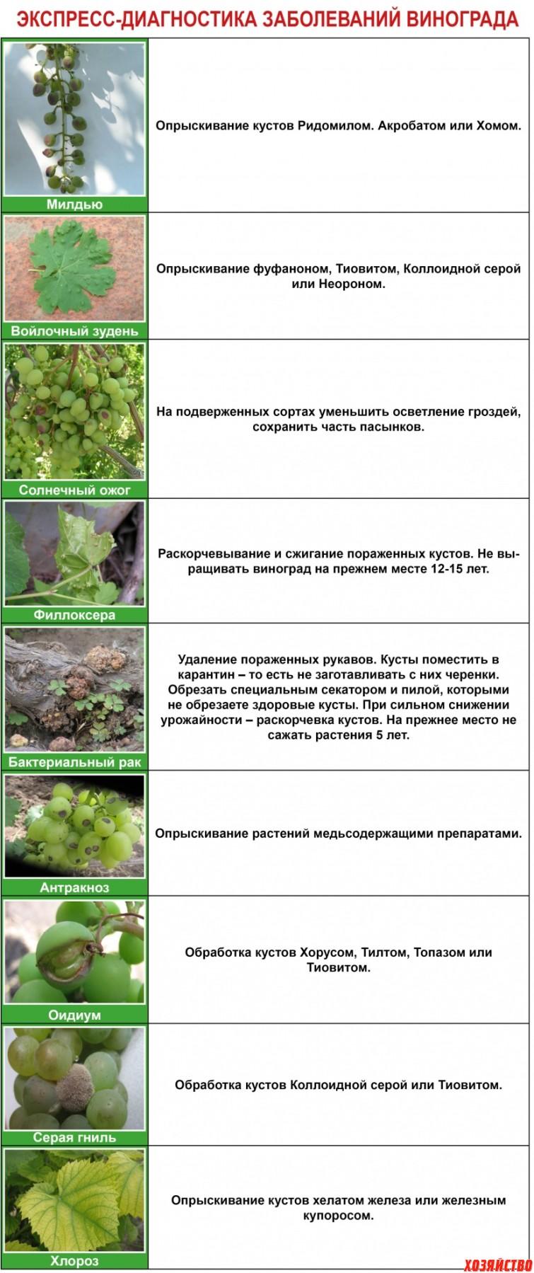 Экспресс диагностика заболеваний винограда.jpg