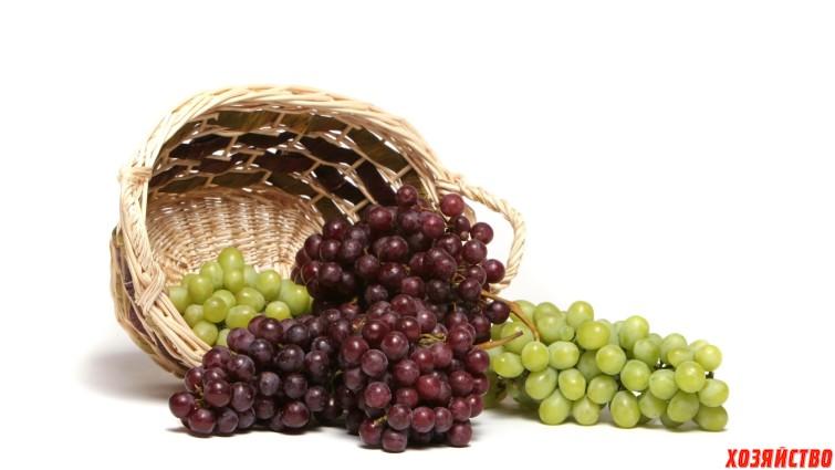 Применение гиббереллина на сортах винограда.jpg