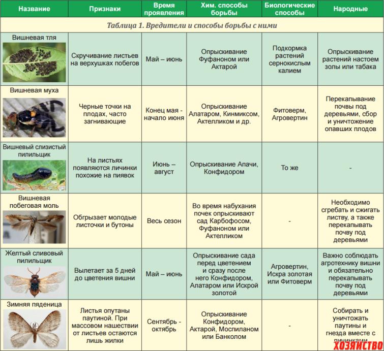 Калина уход и выращивание защита от вредителей 43