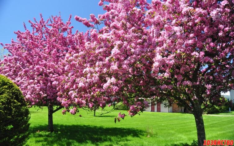 Цветущий сад.jpg