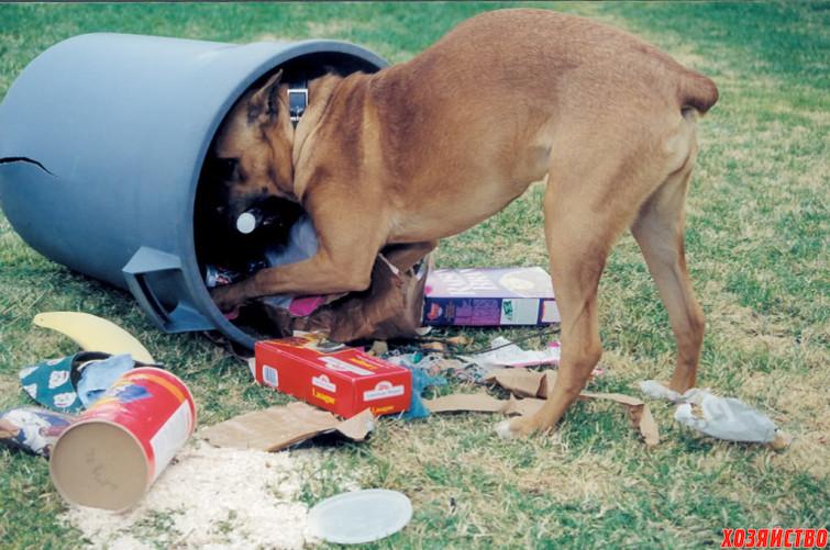 собака ворует еду.jpg