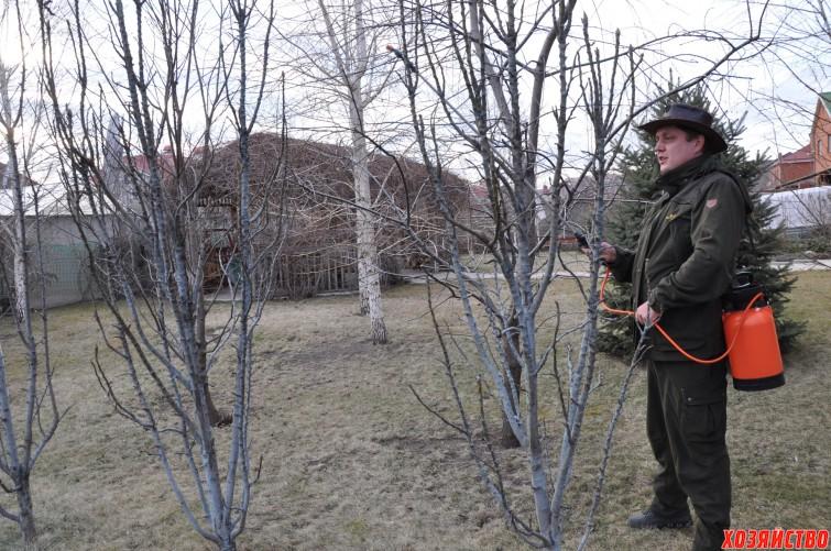 Чтобы уберечь деревья от лиайников и болезней, в зимние оттепели или весной до распускания почек....jpg