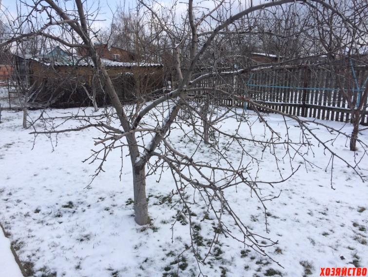 Как  спасаю свой газон от снежной корки.jpeg
