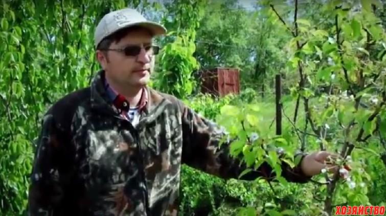 Номирование урожая в саду.jpg