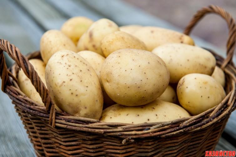 покупайте элитные семена картофеля.jpg