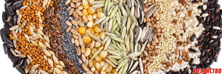 Какие семена купить.jpg