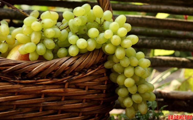 опыление виноград.jpg