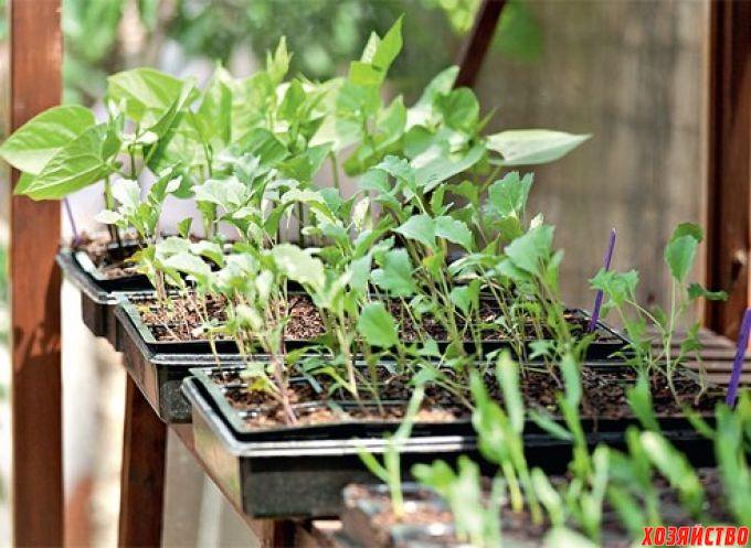 4 способа защитить рассаду от перерастания2.jpg