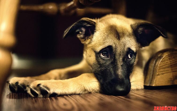 Рана на хвосте у собаки.jpg
