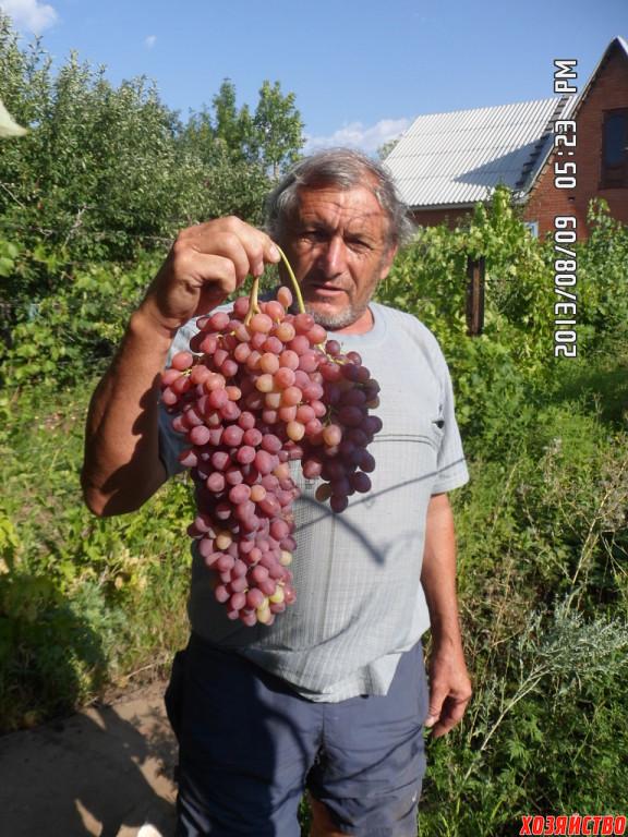 Владимир Колупаев с гроздью кишмиша Лучистого.jpg