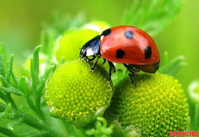 ladybird_14.jpg