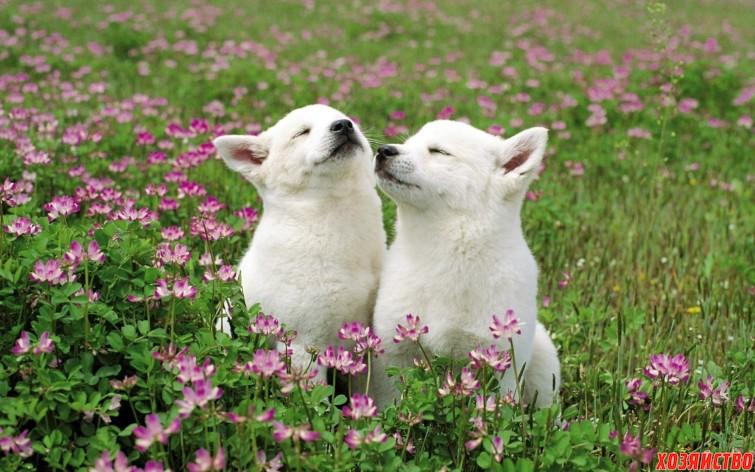 Весна – пора любви3.jpg