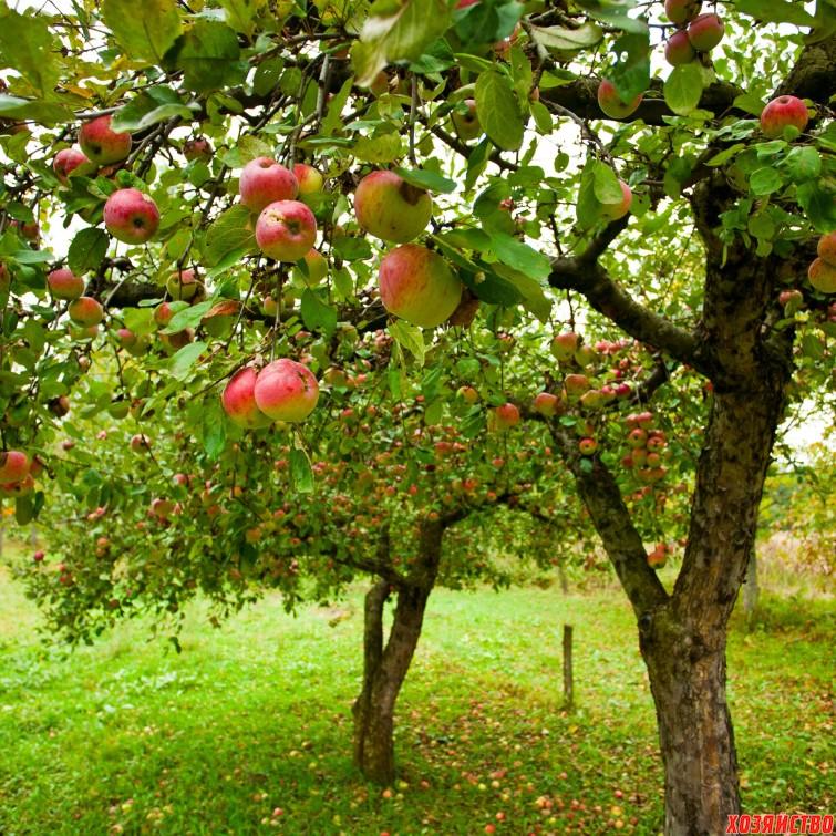 5 причин, по которым могут погибнуть деревья в саду+.jpg