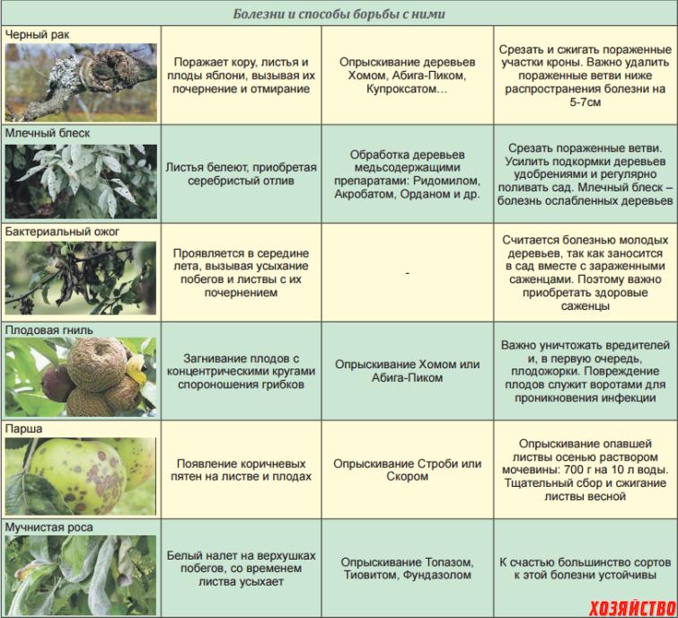 Калина уход и выращивание защита от вредителей 5
