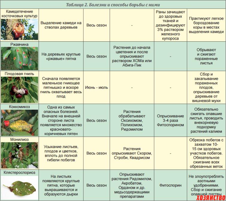 Обработка плодов препаратами