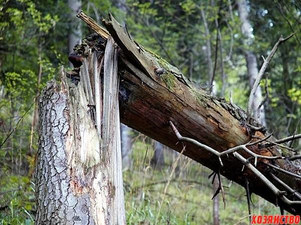 с поломанными деревьями.jpg