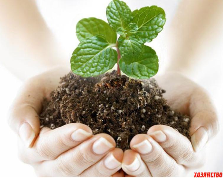 Защита растений от болезней и вредителей.jpg