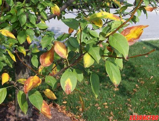 листья.jpg