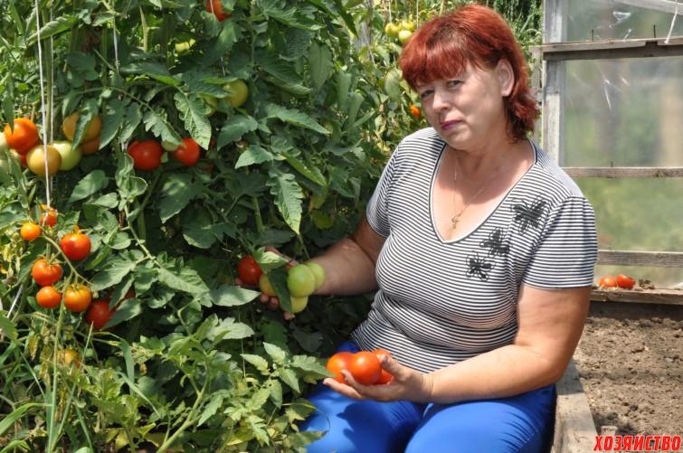Кистевые помидоры в теплице.jpg
