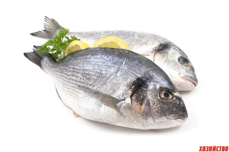 Жирная рыба.jpg