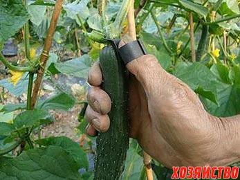 nozh-v-dlya-sbora-plodov.jpg