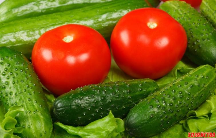 фото помидоры огурцы