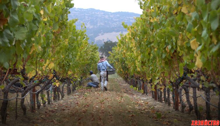 home-vineyards.jpg