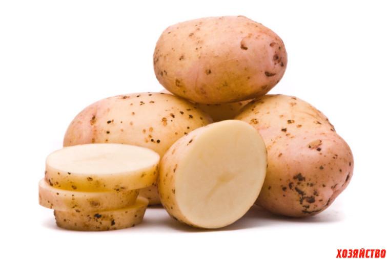 Сырая картошка.jpg