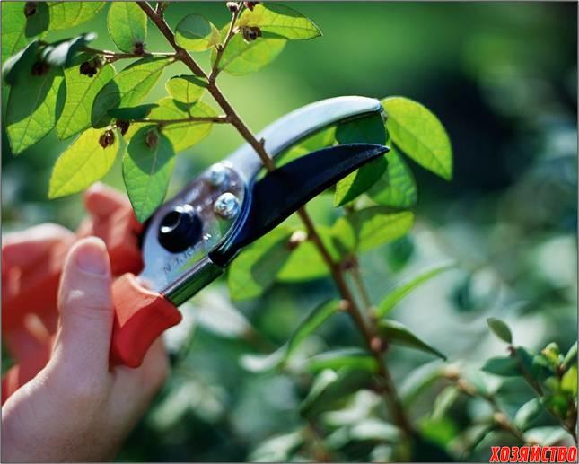 Зачем обрезают деревья2.jpg