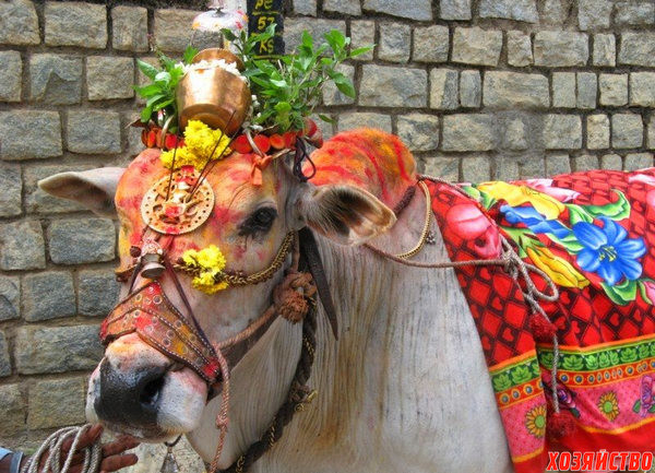 india-pongal-5.jpg