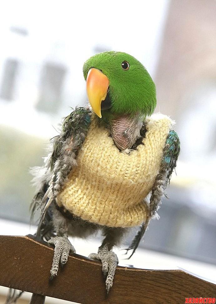 попугай в жилете.jpg