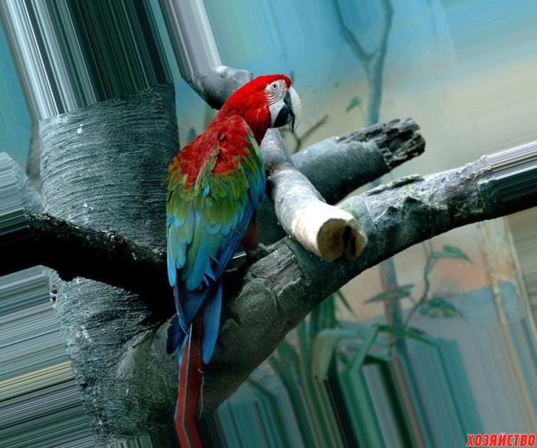 попугай.jpg
