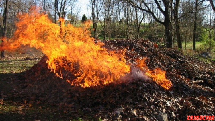 Можно ли сжигать опавшую листву весной.jpg