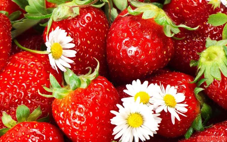 strawberry_texture2571.jpg