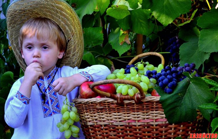 сладкий виноград.png