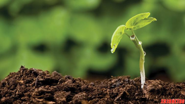 110714-soilcredit-istockphoto.comandrejs-zemdega.jpg